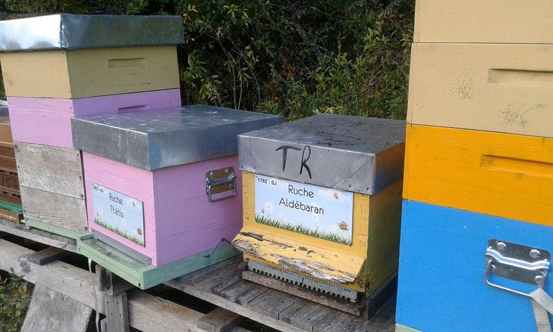 La ruche Aldébaran