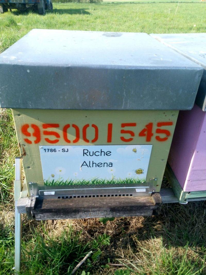 La ruche Alhena