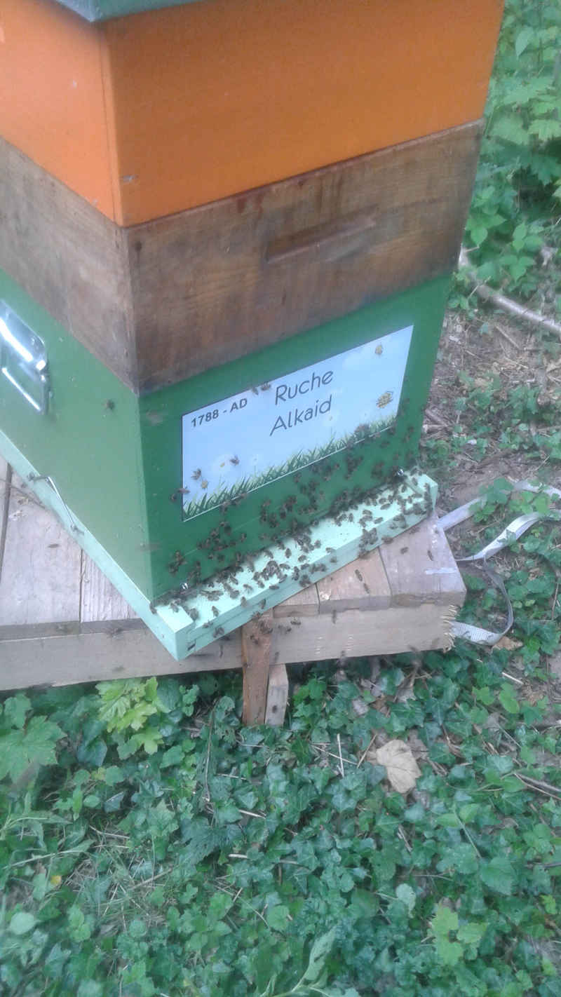 La ruche Alkaid