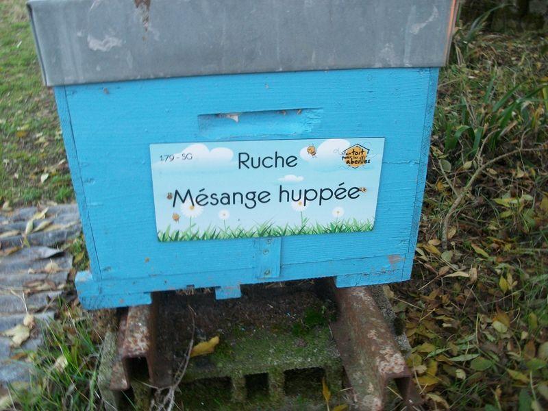 La ruche Mésange huppée