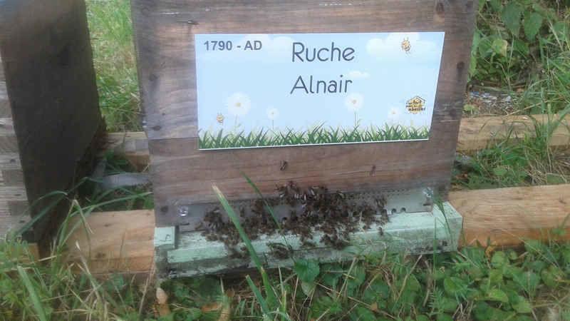 La ruche Alnair