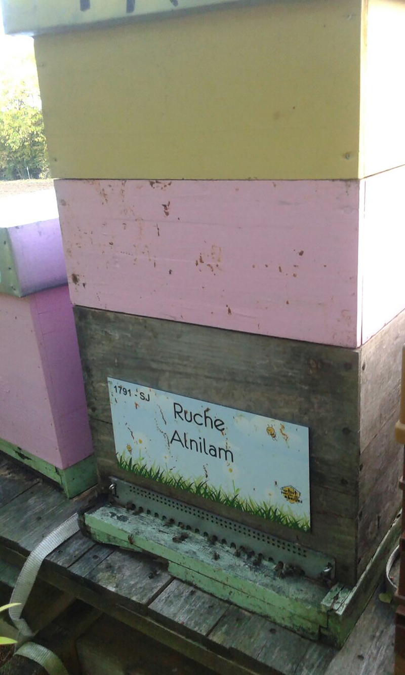 La ruche Alnilam