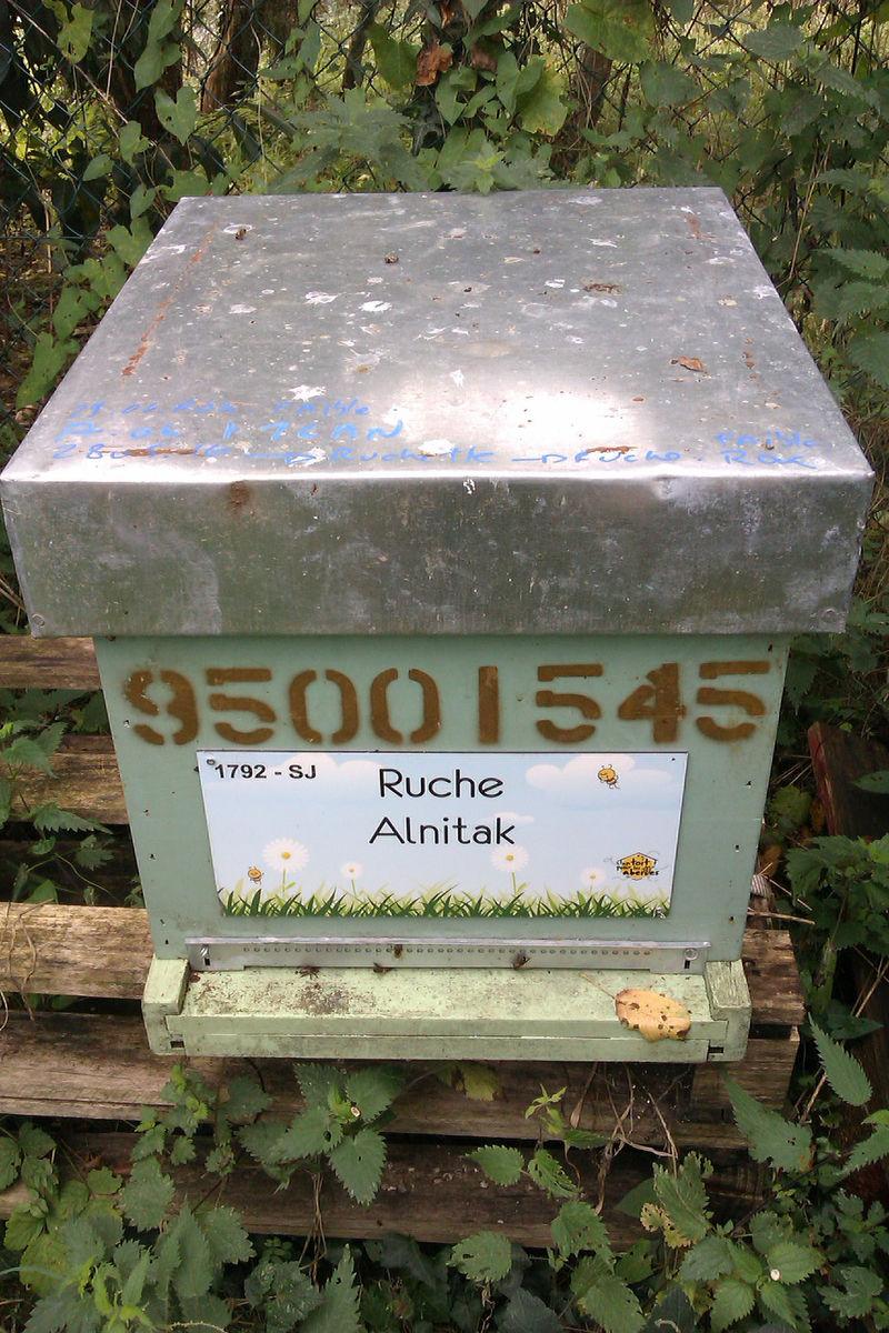 La ruche Alnitak
