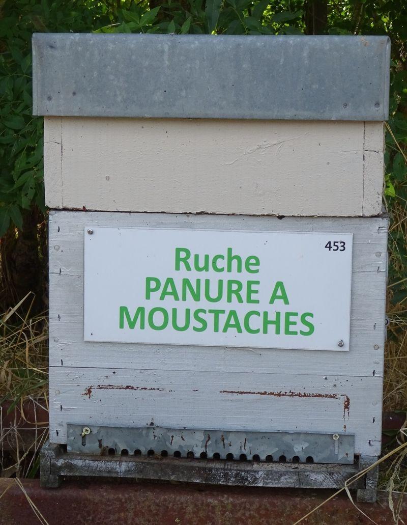 La ruche Panure a moustaches