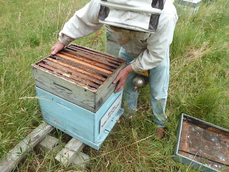 La ruche Sirli de dupont
