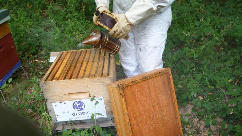 apiculteur rochefort