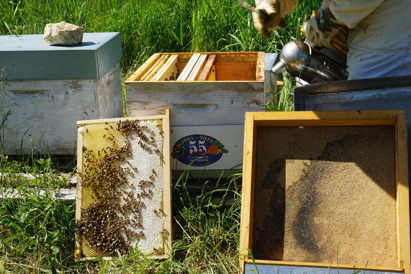 La ruche sas les tamaris