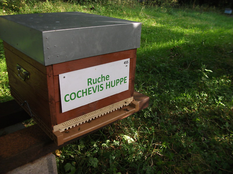 La ruche Cochevis huppé