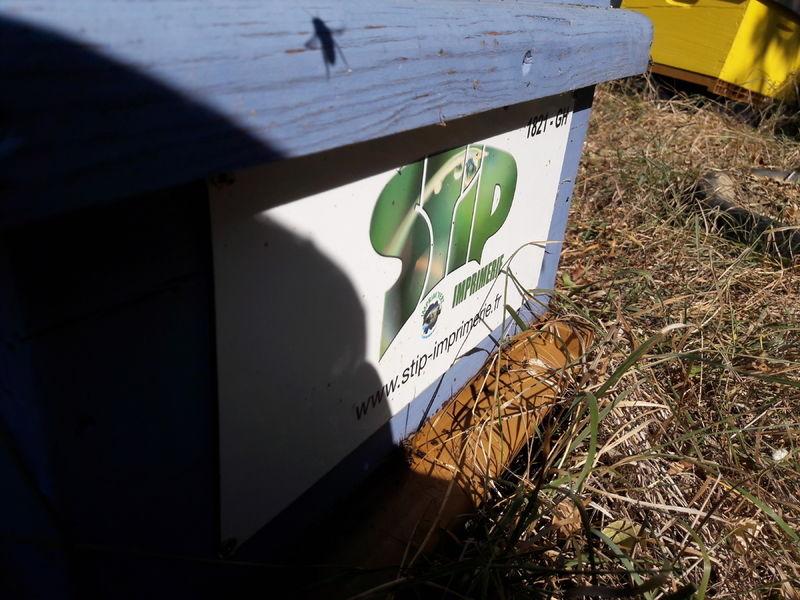 La ruche stip