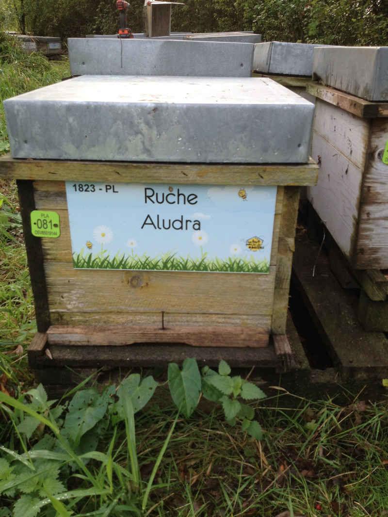La ruche Aludra