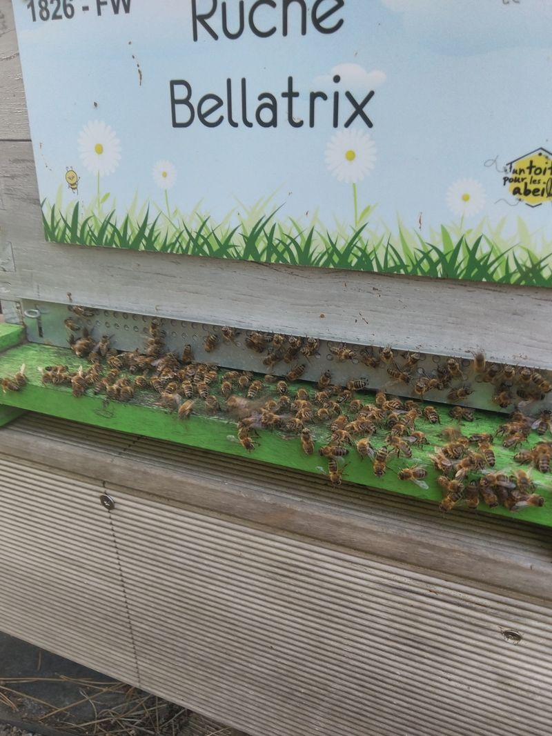 La ruche Bellatrix