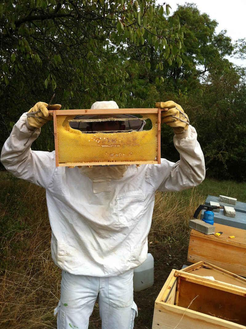 La ruche Beta Gru
