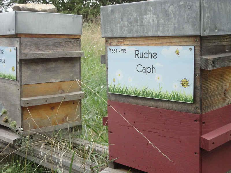 La ruche Caph