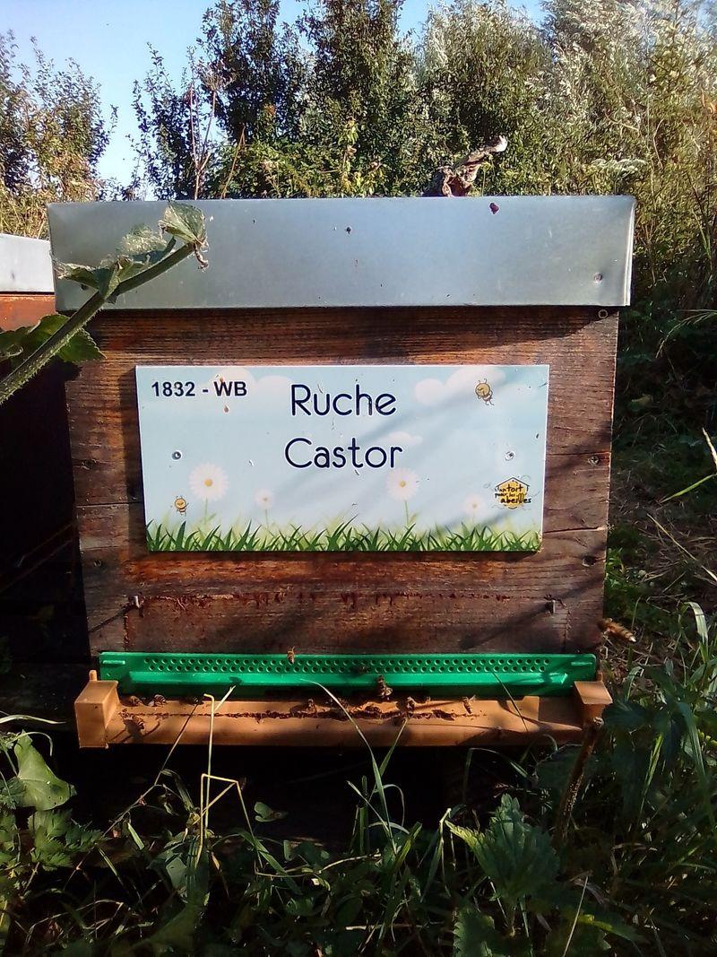 La ruche Castor