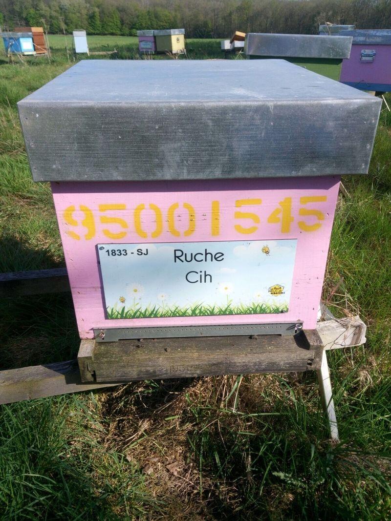 La ruche Cih