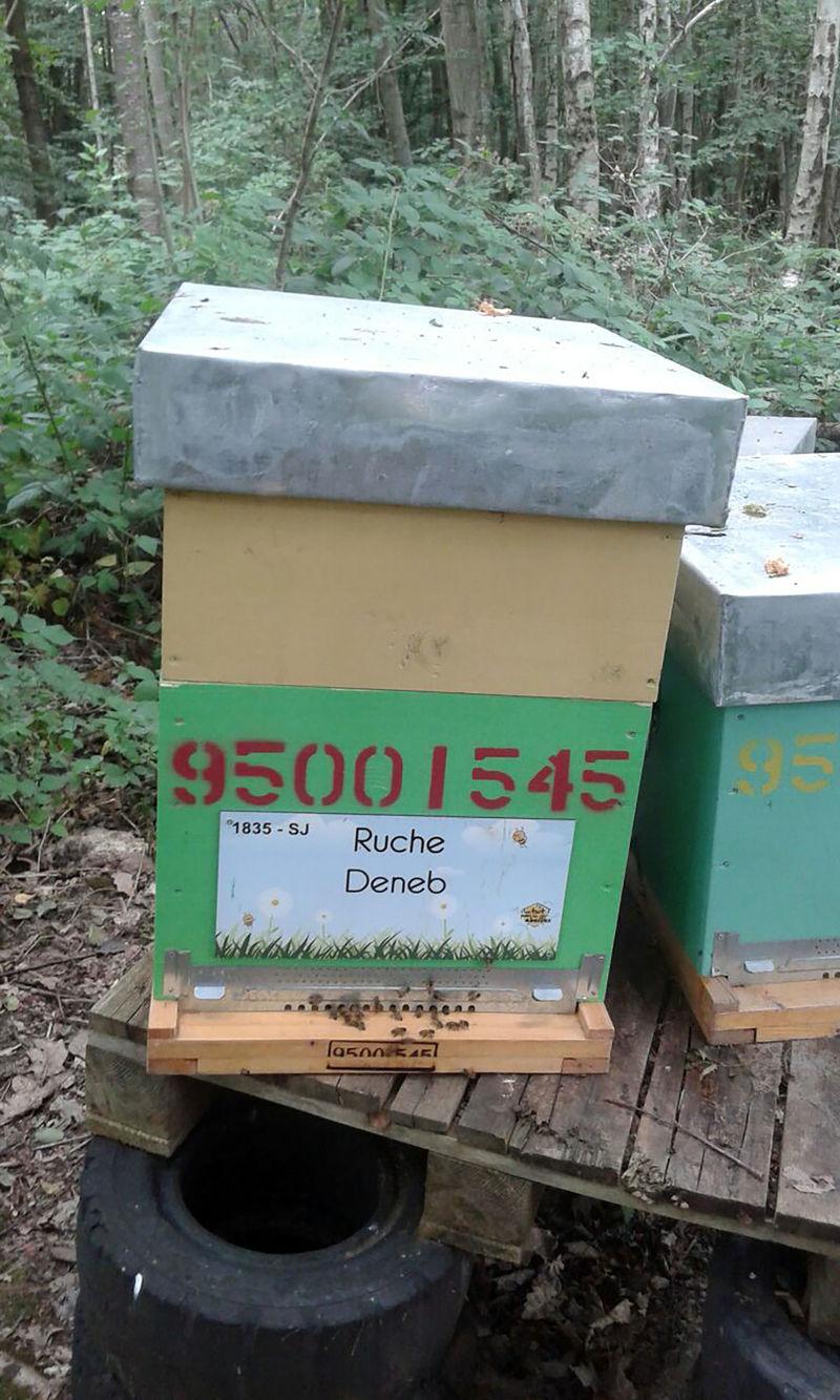 La ruche Deneb