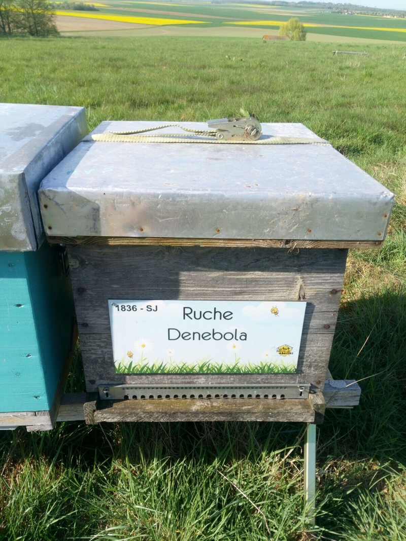 La ruche Denebola