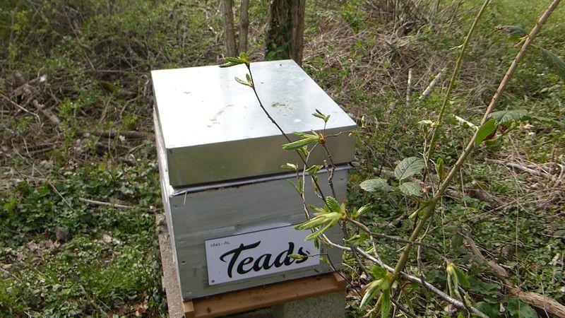 La ruche TEADS France