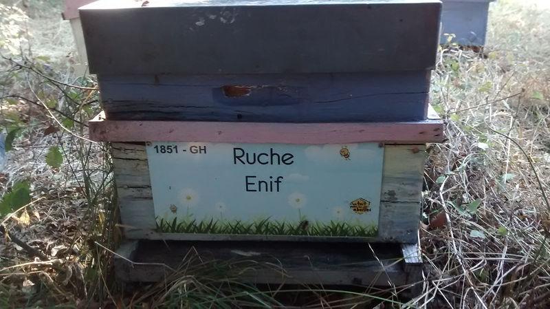 La ruche Enif