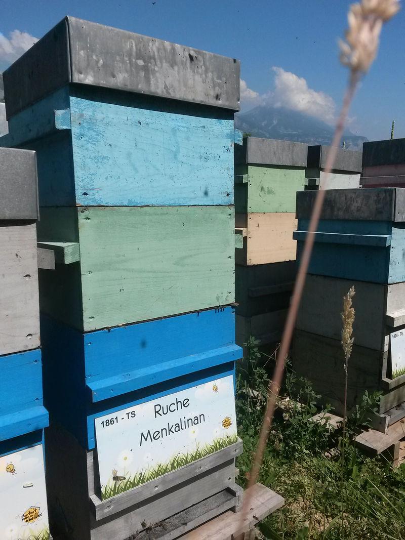 La ruche Menkalinan