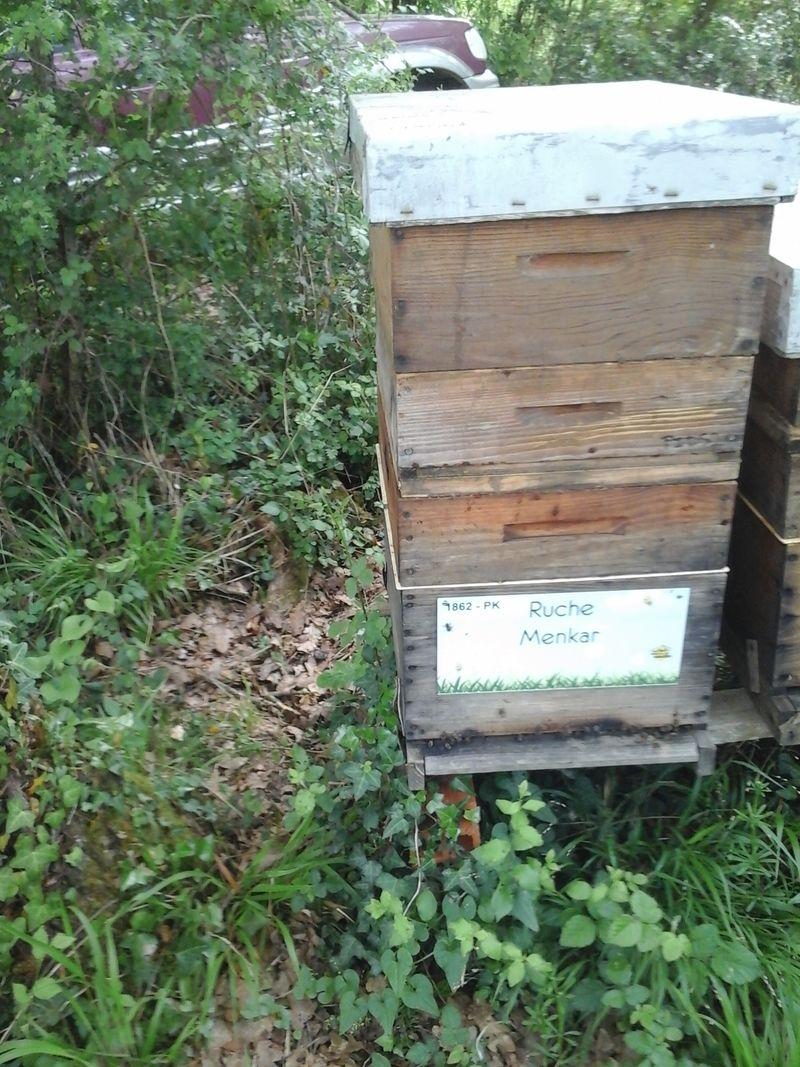 La ruche Menkar