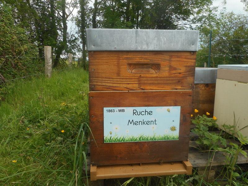 La ruche Menkent