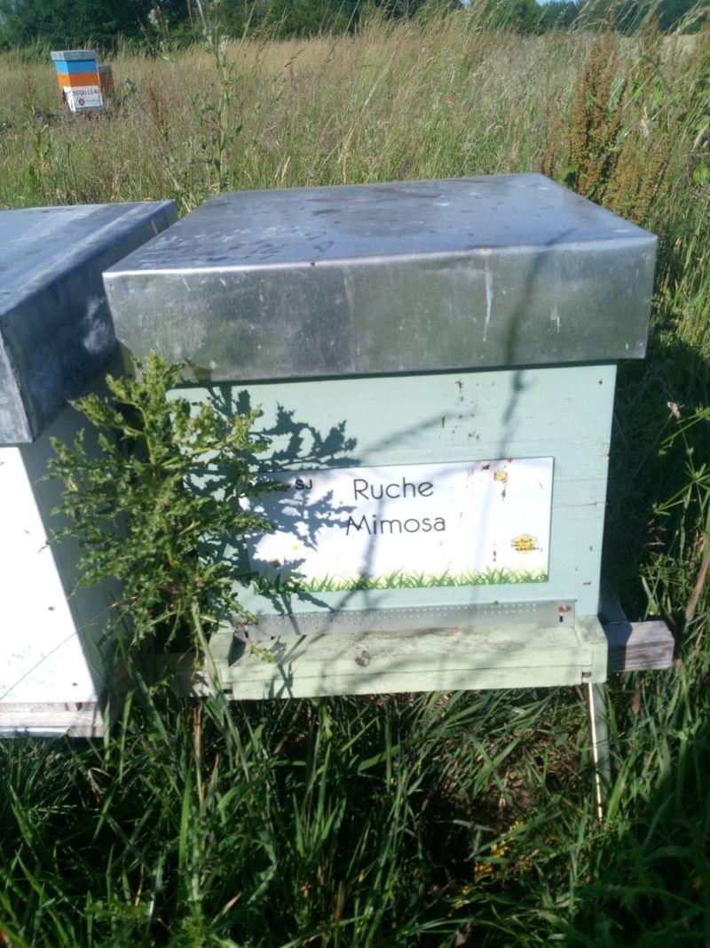 La ruche Mimosa
