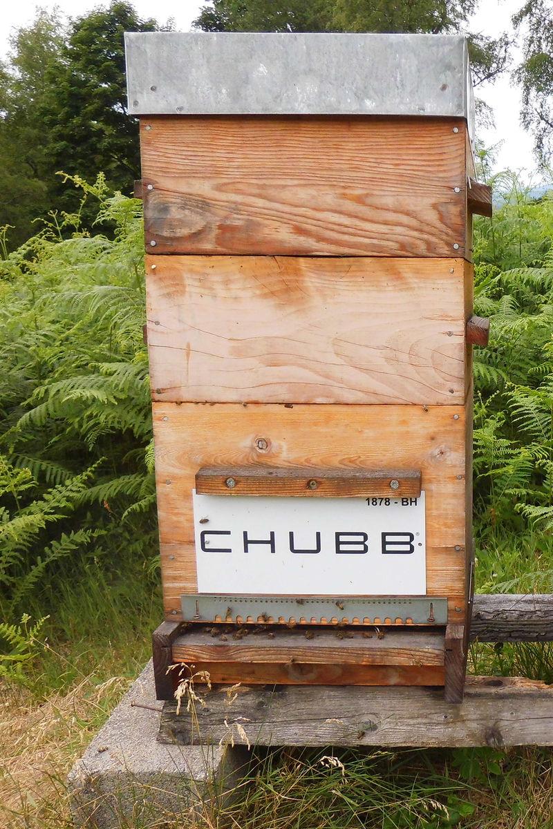 La ruche CHUBB