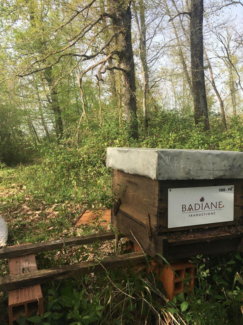 La ruche BADIANE TRADUCTIONS