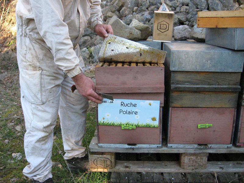 La ruche Polaire