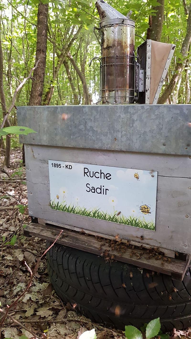 La ruche Sadir