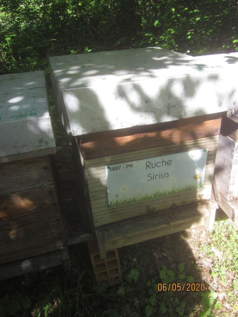 La ruche Sirius