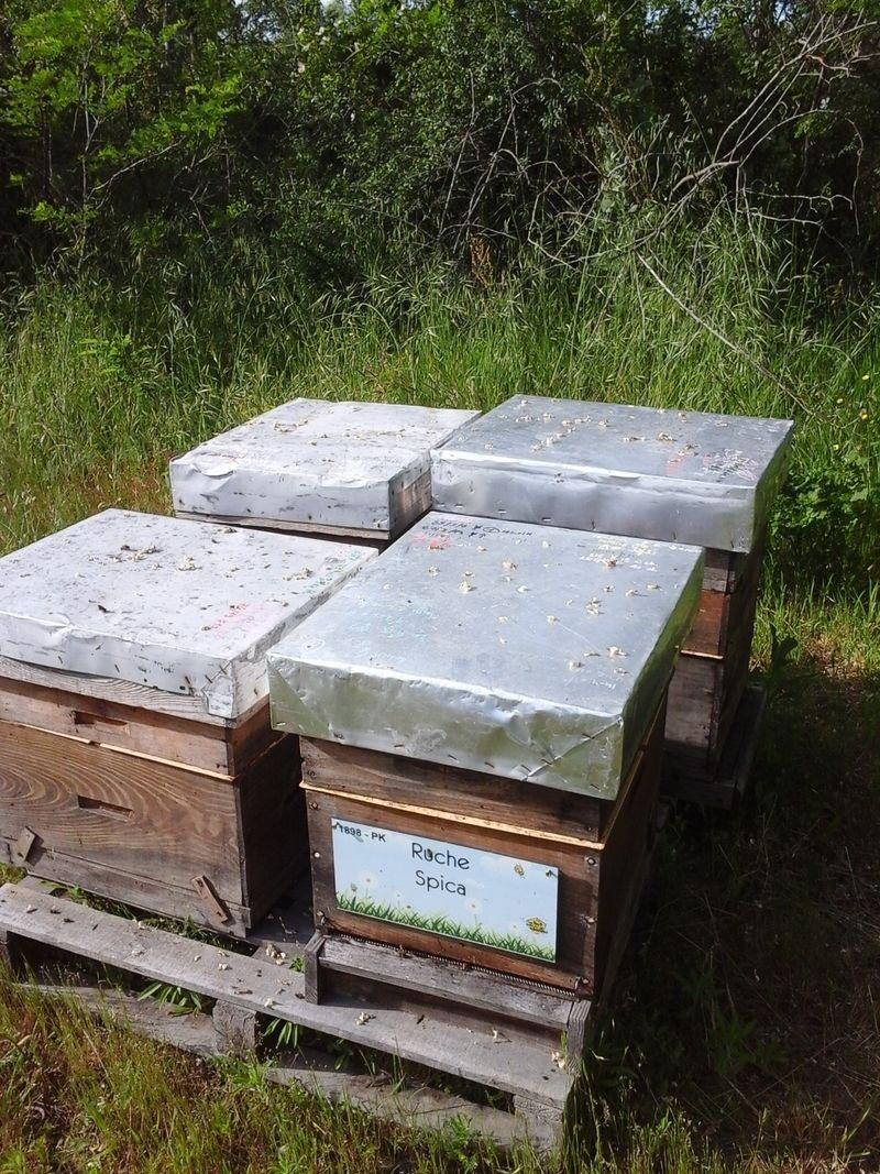 La ruche Spica