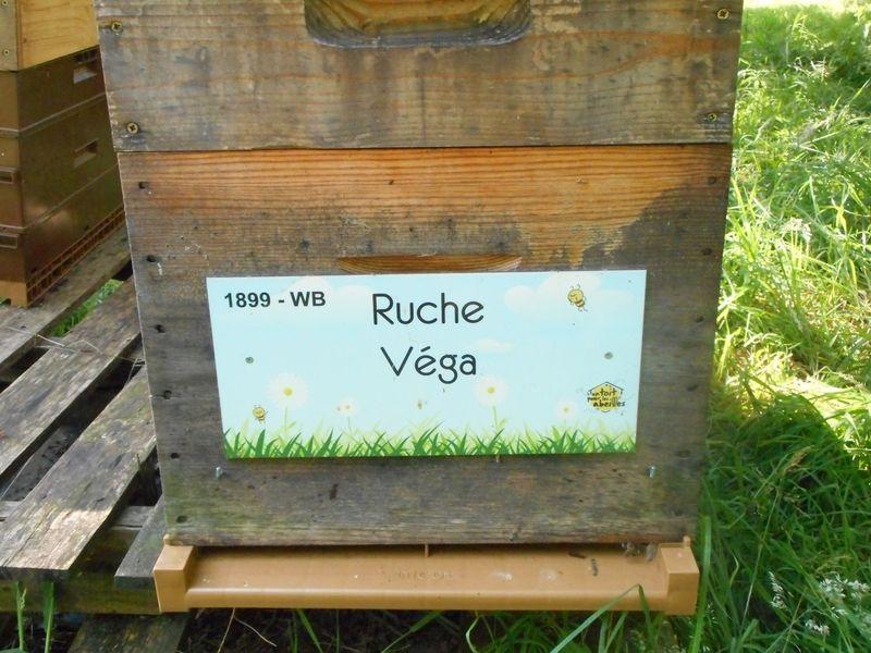 La ruche Véga