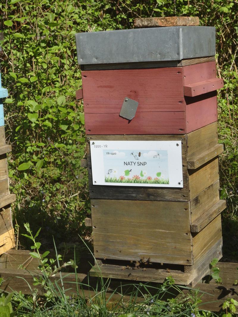 La ruche NATY SNP