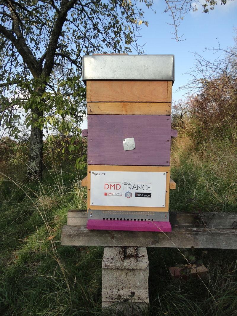 La ruche Groupe dmd france