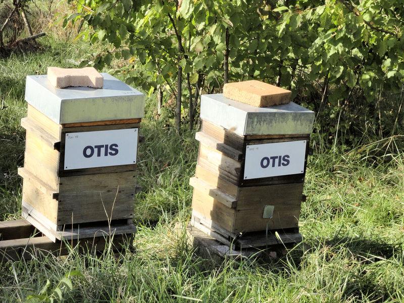 La ruche OTIS