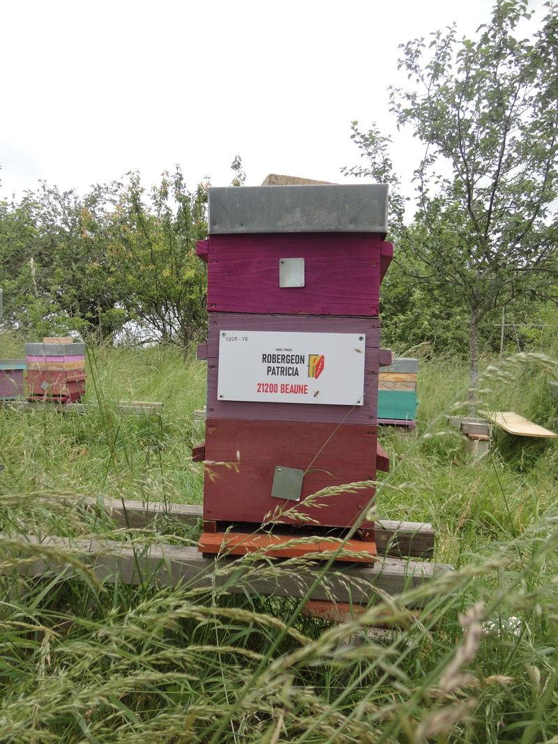 La ruche tabac presse