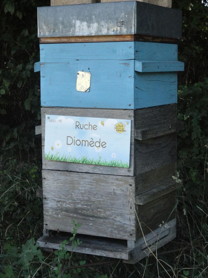 La ruche Diomède
