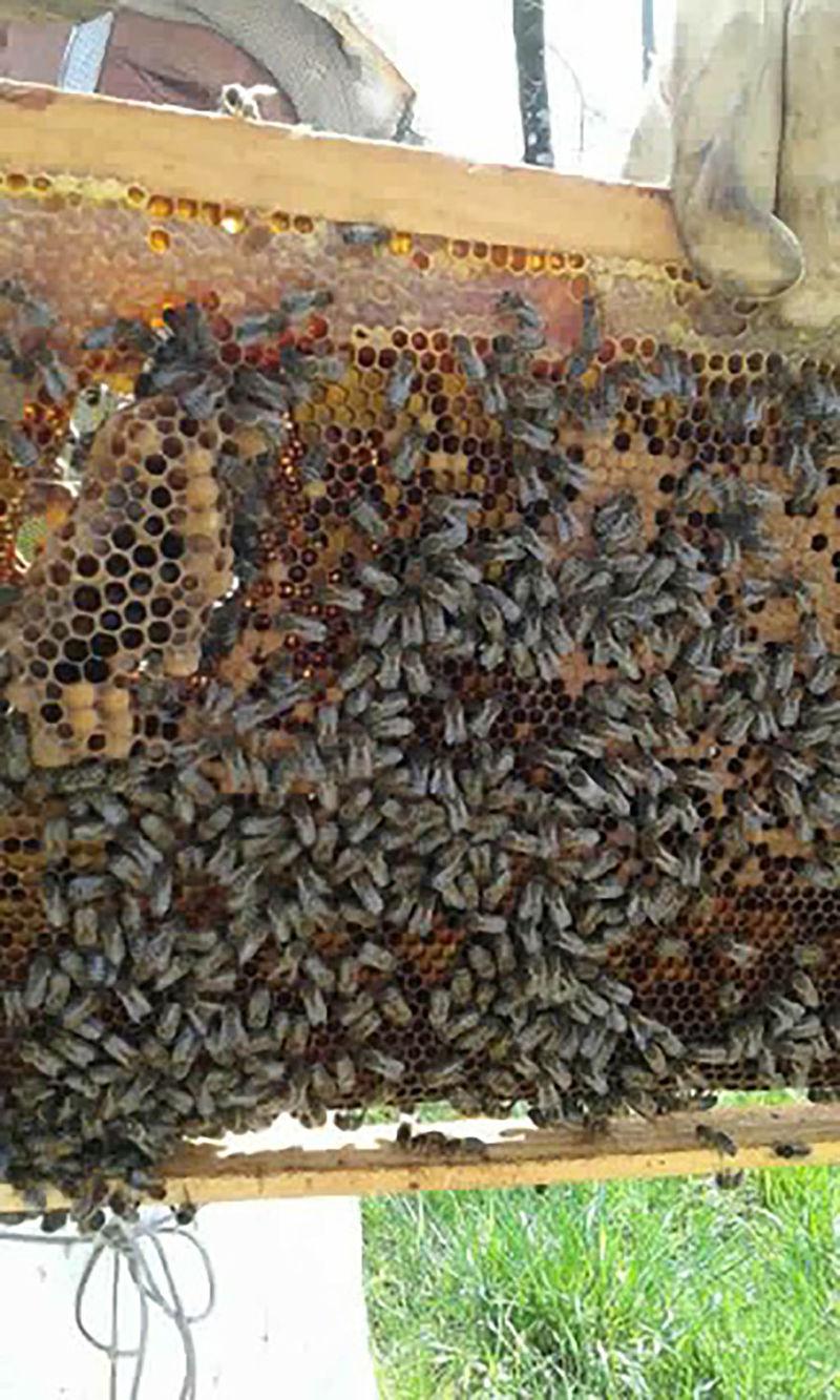 La ruche Carlac