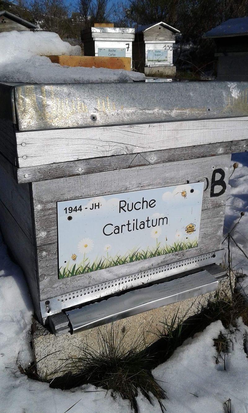La ruche Carlatum