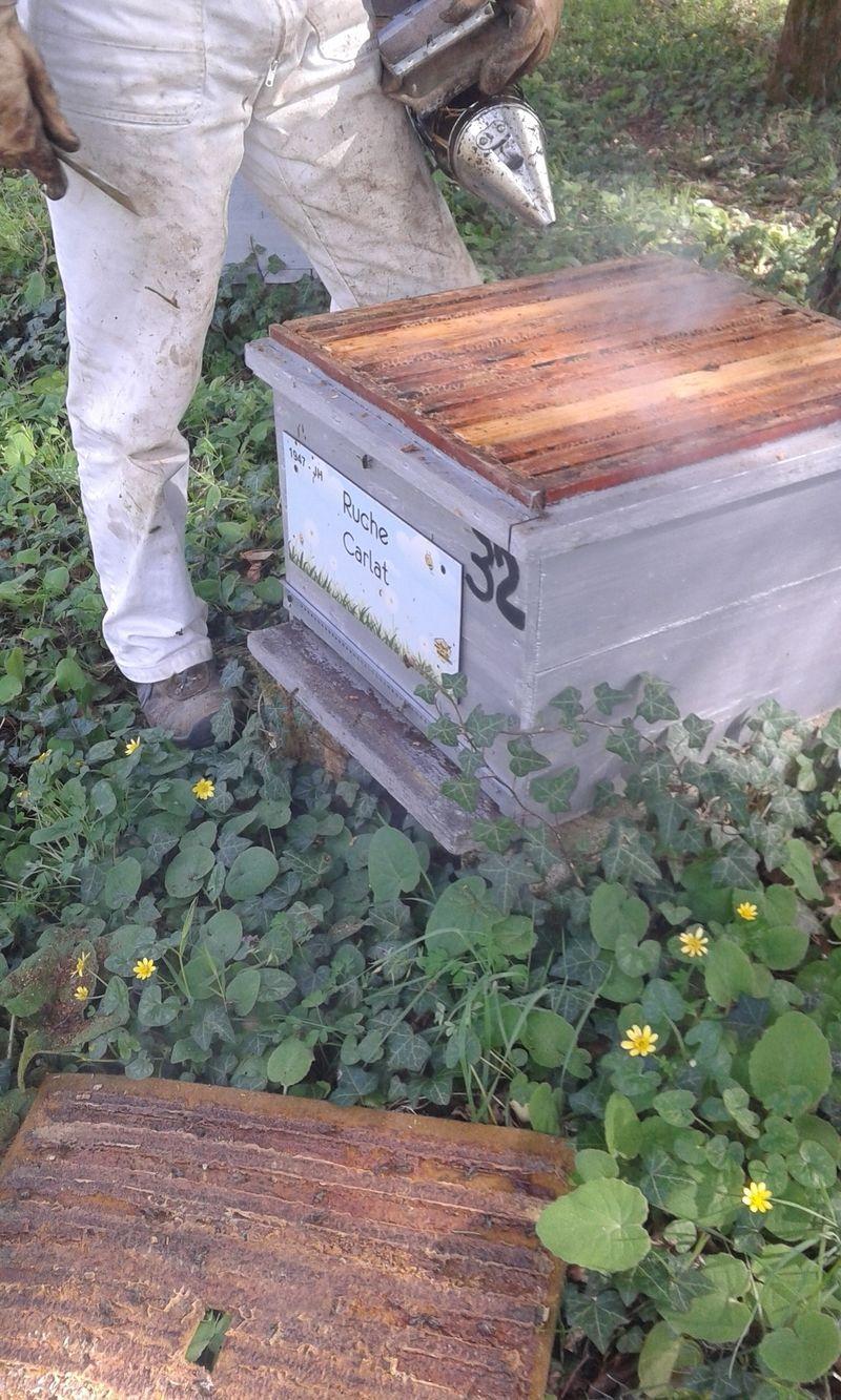 La ruche Carllat
