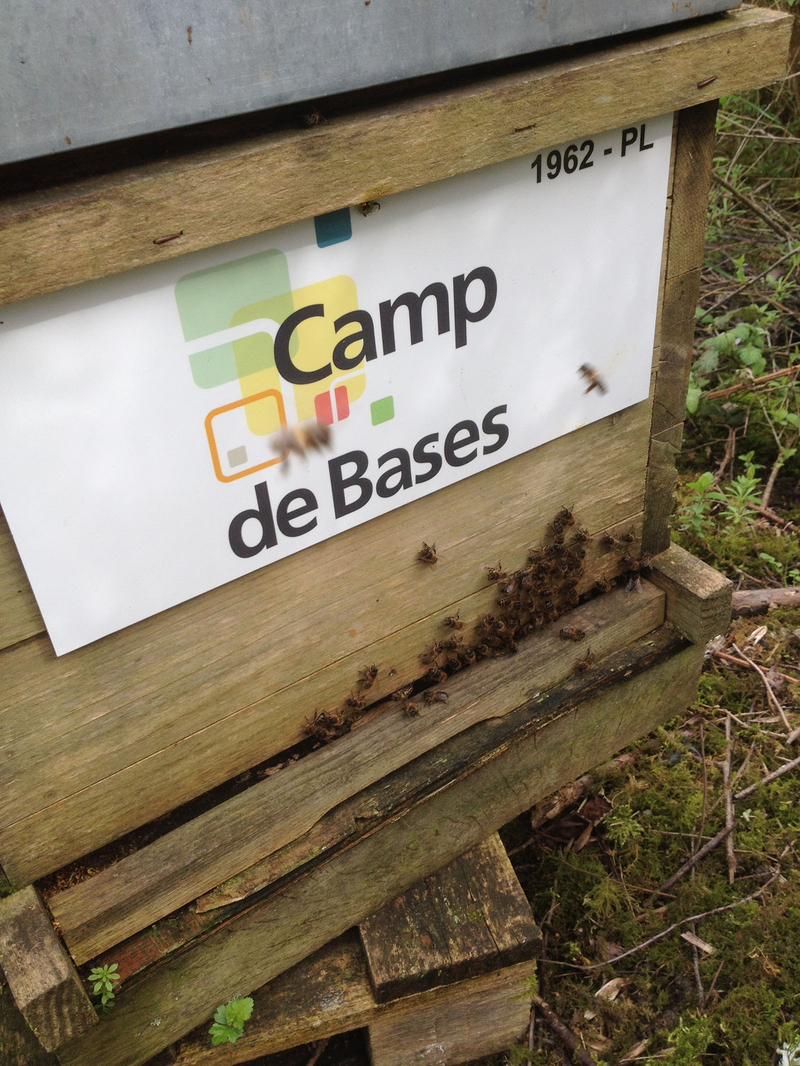 La ruche WEBEDIA DATA SERVICES By Camp de Bases