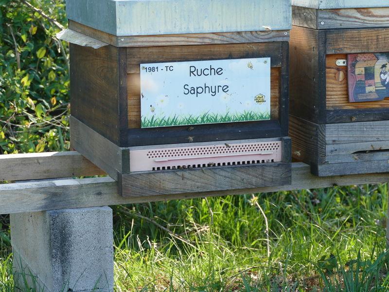 La ruche Saphyre