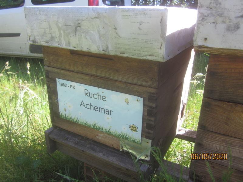 La ruche Achemar