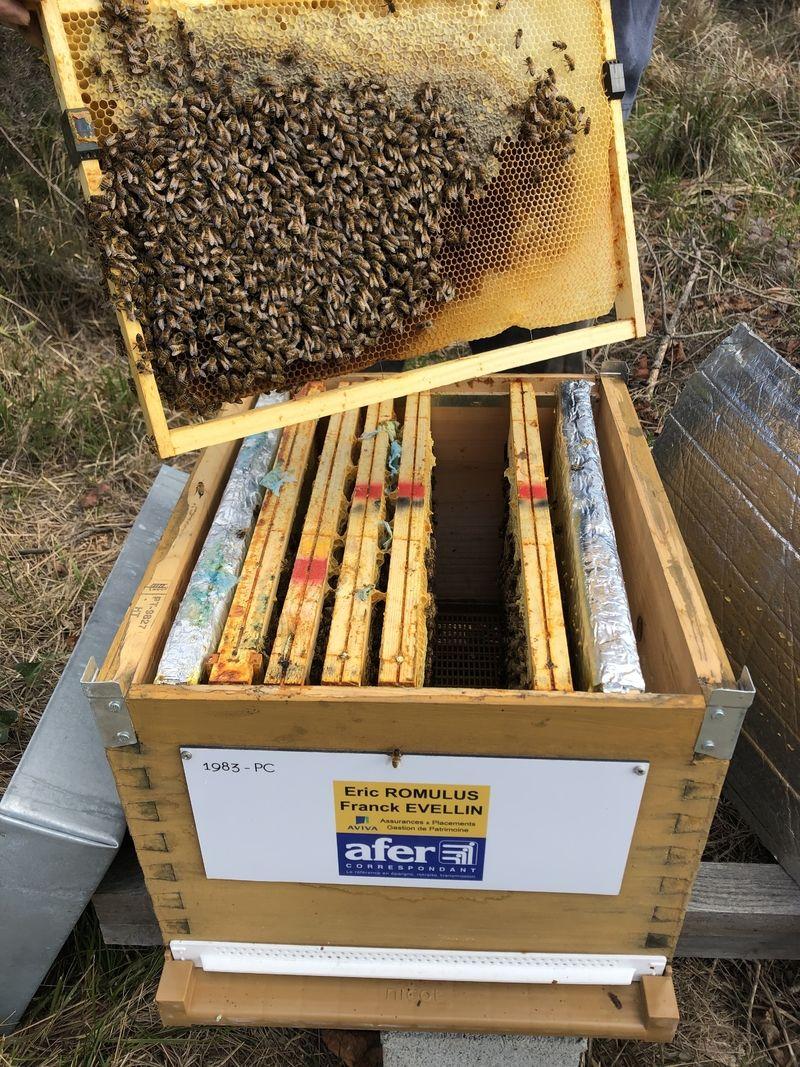 La ruche Aviva assurances - saint-raphaël