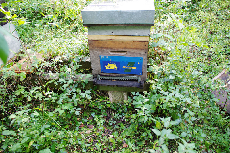 La ruche Astre – Le Guevel