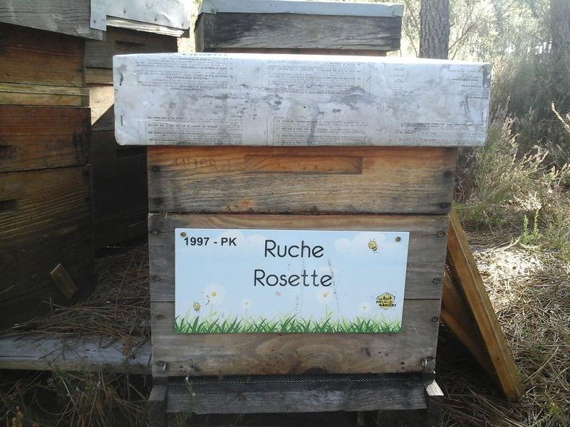 La ruche Rosette