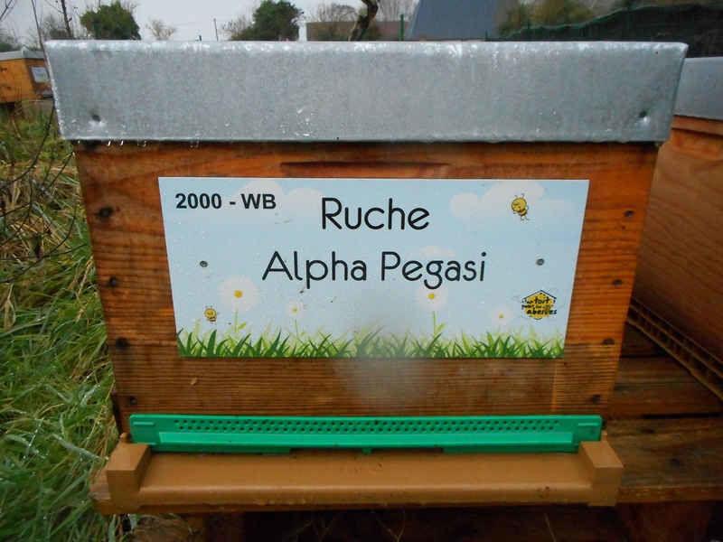 La ruche Alpha Pegasi