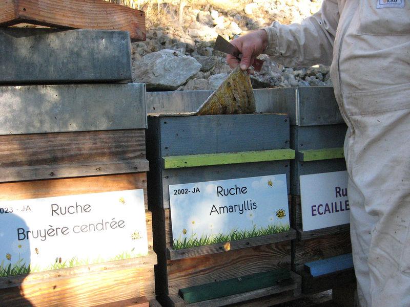 La ruche Amaryllis